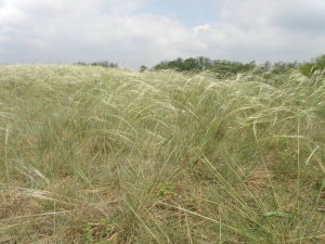 Restoration of Endemic Pannonic Salt Marshes and Sand Dunes in Southern Slovakia