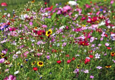 Medzinárodný deň biodiverzity – 22. máj