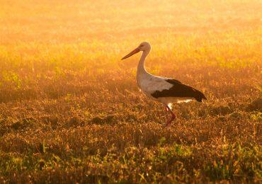 Sťahovanie vtáctva – aktivita pre žiakov