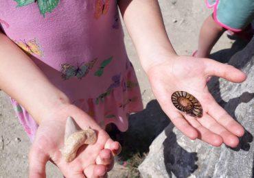 Hľadáme lektora/lektorku environmentálnej výchovy