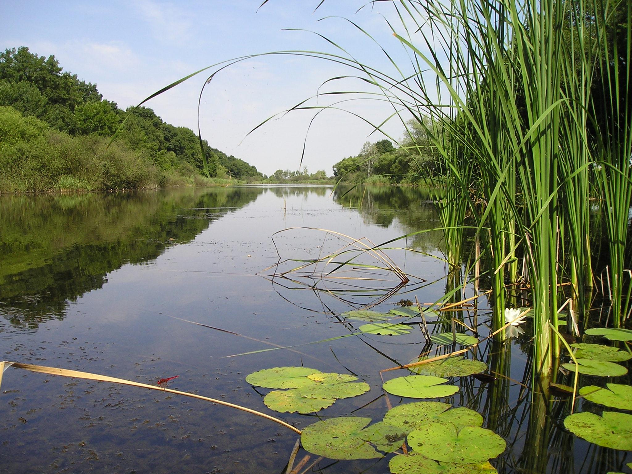 Úloha siete Natura 2000 a manažment vybraných prioritných biotopov v integrovanej ochrane krajiny v Slovenskej republike